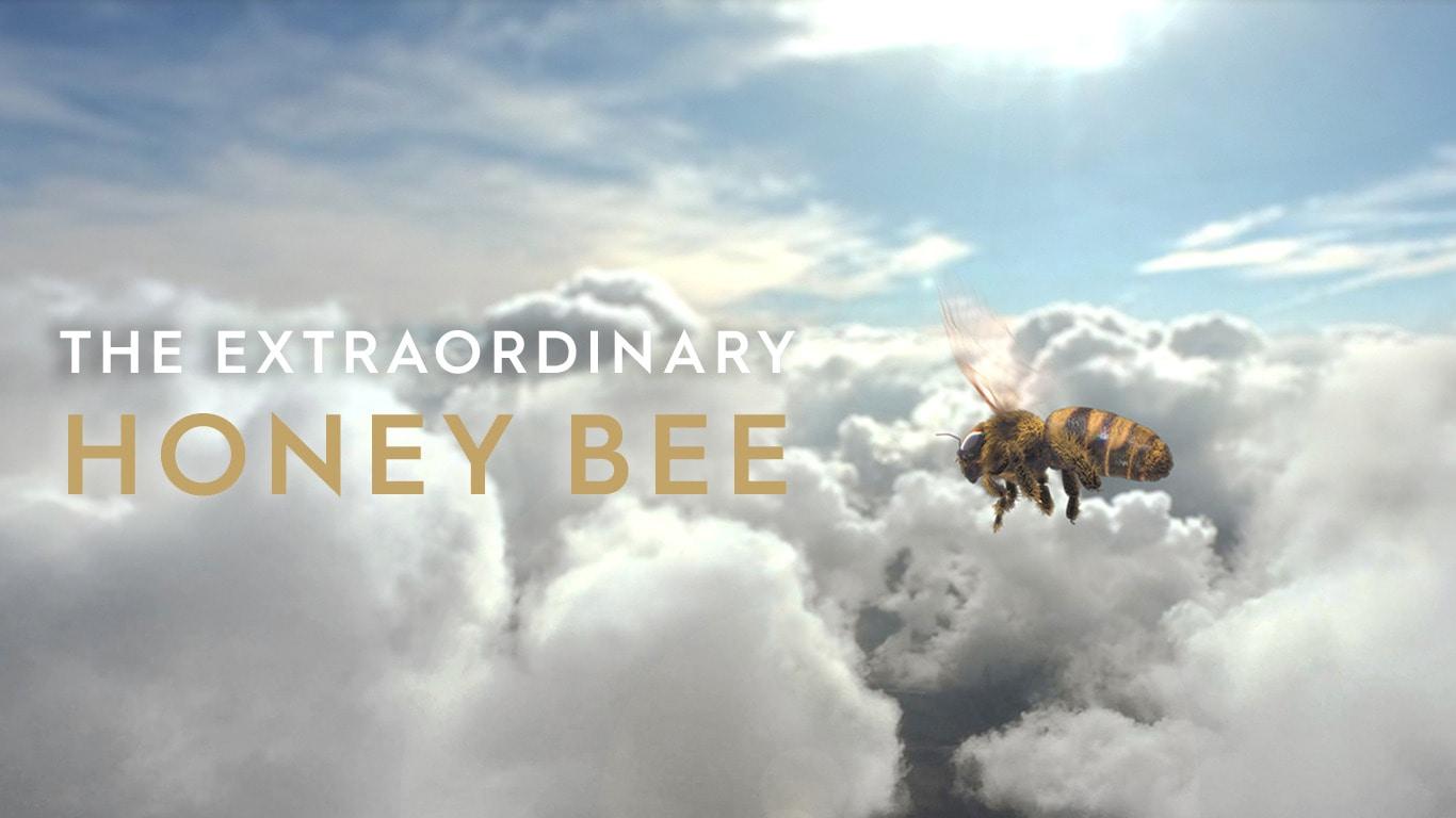 The Extraordinary Honey Bee